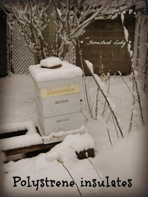 How to prepare for bee keeping - wooden hives are just fine but polystyrene is extra insulation - www.homesteadlady