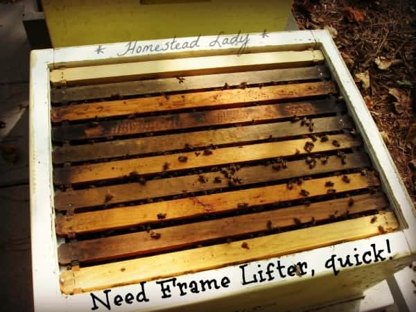 How to prepare for bee keeping - you need a frame lifter! www.homesteadlady.com