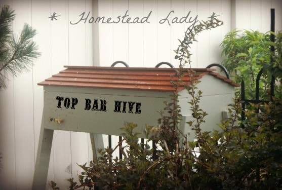 Top bar hive - www.homesteadlady.com