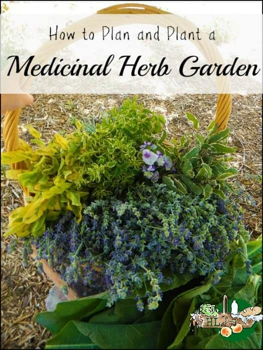 How To Plan And Plant A Medicinal Herb Garden L DIY Health L Homestead Lady  (