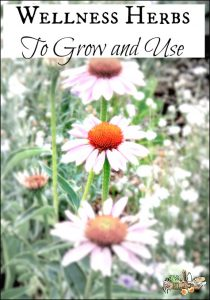 Wellness Herbs to grow in your garden and use in your home l Homestead Lady.com