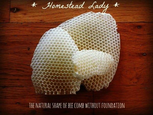 Burr comb bees wax - www.homesteadlady.com
