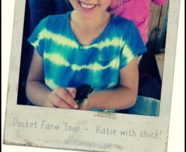 How to Host a Farm Tour for Kids l Rules, crafts, ideas l urban homestead friendly l Homestead Lady (.com)
