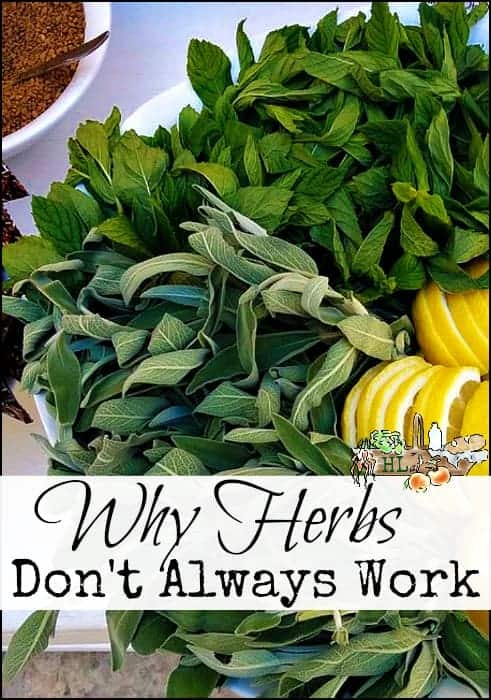 Why Medicinal Herbs and Natural Healing Don't Always Work l Are you doing something wrong? Are doctors bad? l Join us for this discussion l Homestead Lady (.com)