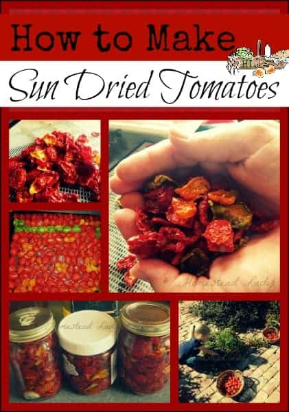 "Make ""Sun Dried"" Tomatoes from your tomato harvest l Preserve in olive oil for a delectable snack l Homestead Lady (.com)"