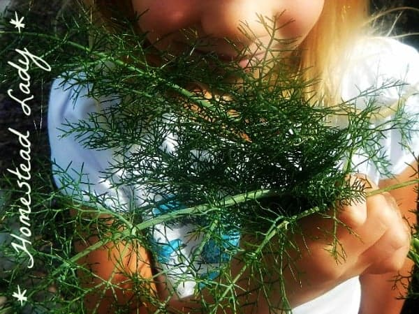 How To Plan And Medicinal Herb Garden Homestead Lady