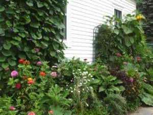 interview with susan at learning and yearning by homestead lady - Ms Susan's garden