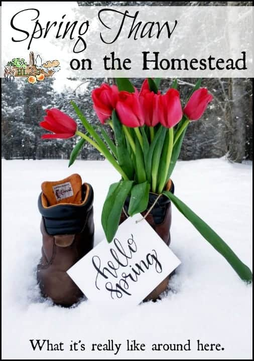 Spring thaw on the homestead l Homesteading ain't all rainbows and unicorns l Homestead Lady.com