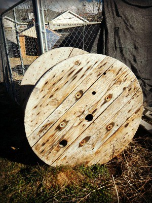 Spring thaw on the homestead - wooden spools used for baby goats to play on - www.homesteadlady.com