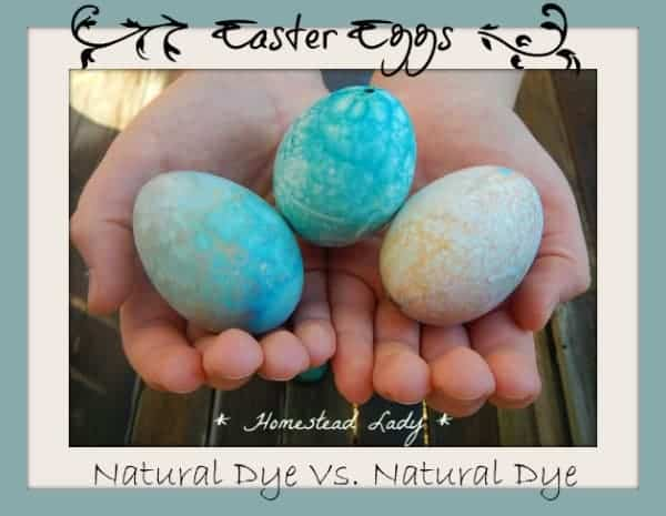 Easter Eggs - Natural Dye Vs. Natural Dye - How do homemade and store bought compare  www.homesteadlady.com