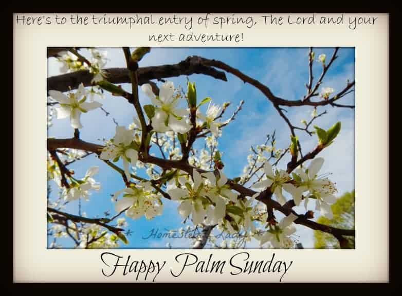 Happy Palm Sunday - www.homesteadlady.com