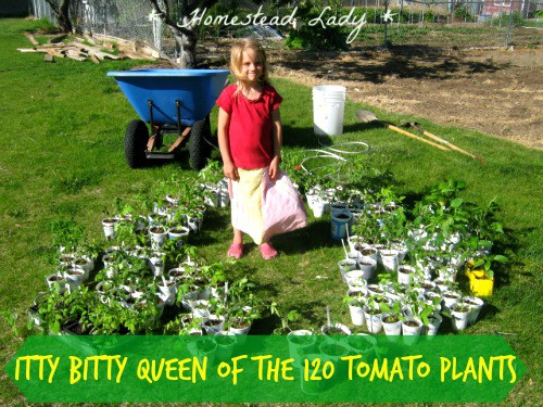 5 Annual Vegetables for the Children's Garden - tomatoes are certainly on the list! www.homesteadlady.com