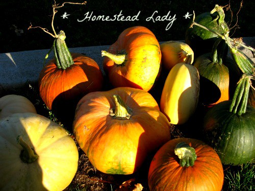 Five Annual Vegetables for the Children's Garden - Pumpkins are a must for any child to grow - www.homesteadlady.com