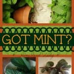 What to do with mint l Homestead Lady