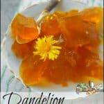 Dandelion Gelatin