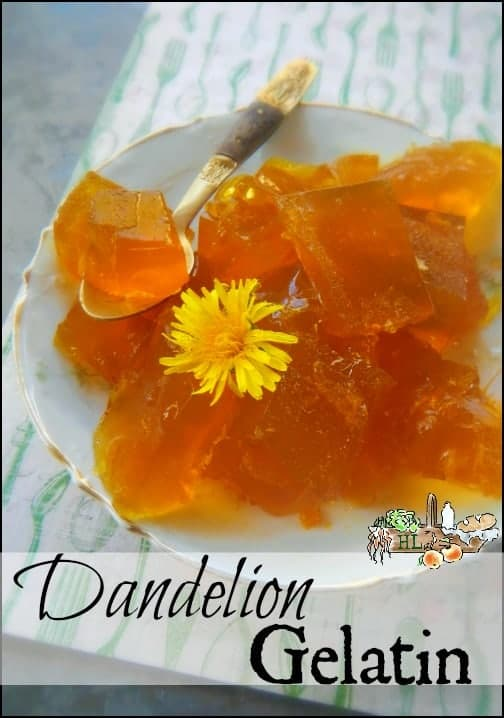 Dandelion Gelatin l Forage dandelions for a healthy treat l Homestead Lady.com