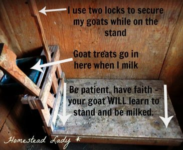 How to train a goat to a milkstand - www.homesteadlady.com - The milkstand