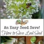 How to Save Leek Seeds