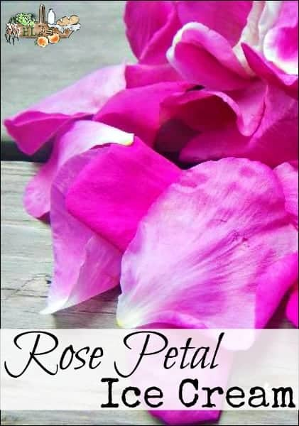Rose Petal Homemade Ice Cream l Homestead Lady (.com)
