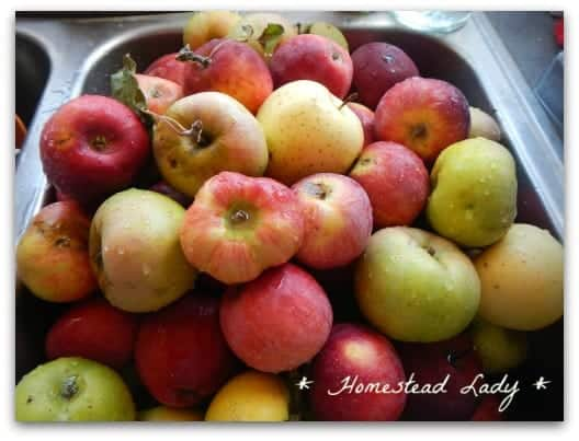 Healthy Food Storage l Short and Long Term l Homestead Lady