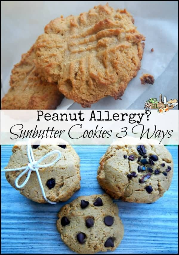 Peanut Allergy? Try Sunbutter Cookies l Sunflower butter cookies three different ways l Homestead Lady (.com)