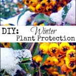 DIY Winter Plant Protection