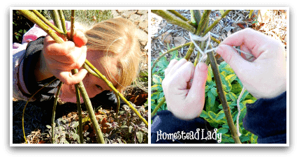 DIY Winter Plant Protection l So simple your kiddos can do it l Homestead Lady (.com)