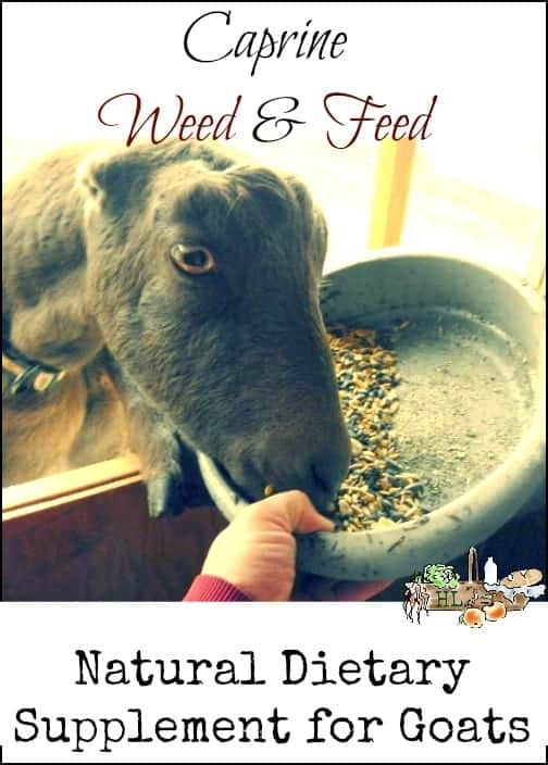 Natural Dietary Supplement for Goats l Homestead Lady