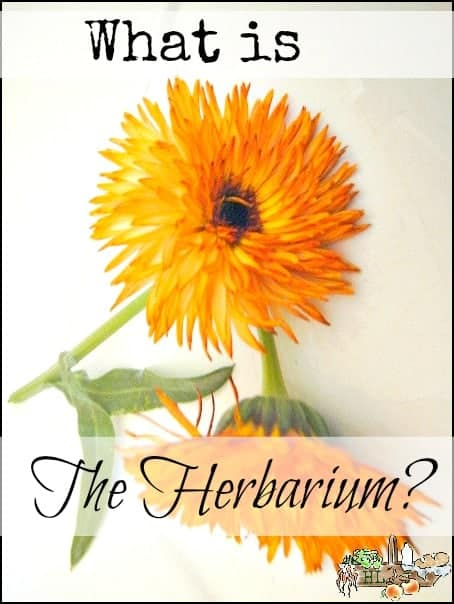 The Herbarium l Like Candyland for herb nerds l Grow better herbs! l Homestead lady (.com)