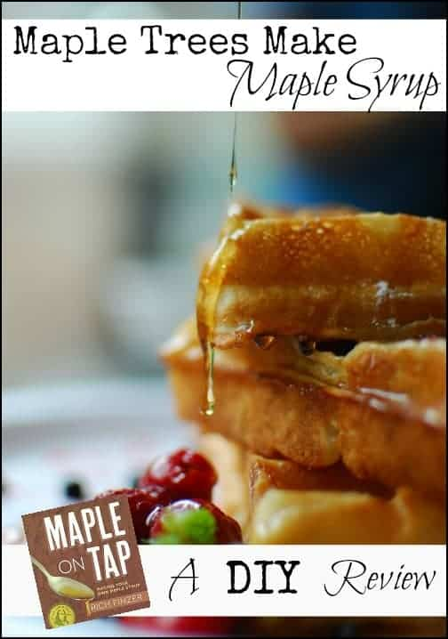 Maple Trees Make Maple Syrup l Maple on Tap Book Review l Homestead Lady.com