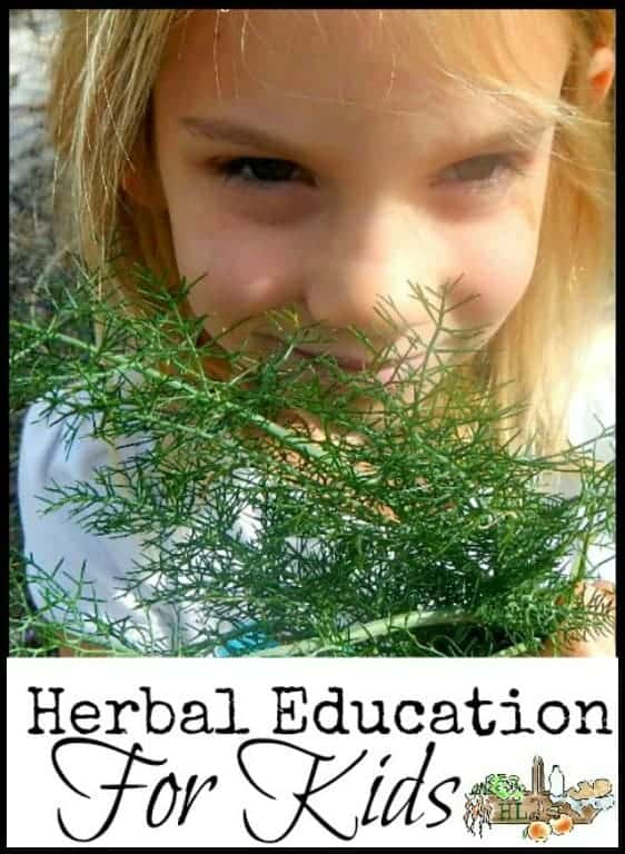 Herbal Education for Kids l Recommended resources and tips l Homestead Lady.com