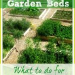 Raised Garden Beds: What to do for Spring?