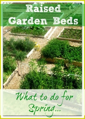Raised Garden Beds l What to do in spring l Homestead Lady (.com)