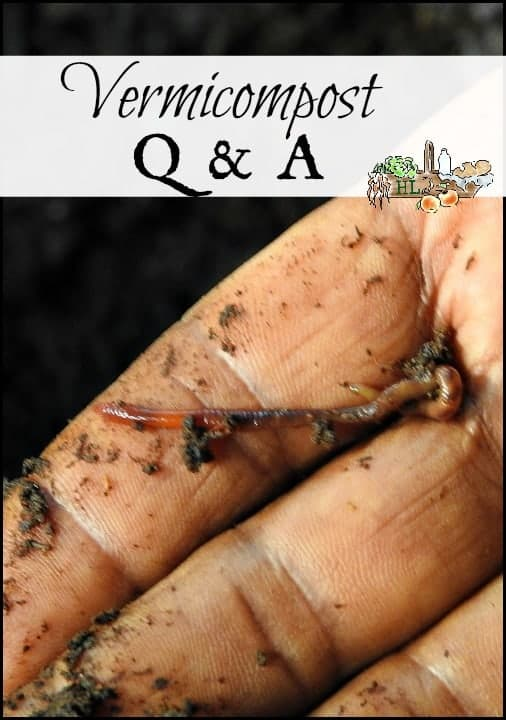 Vermicompost Q&A l Learn about composting with worms l Easy homestead livestock l Homestead Lady.com