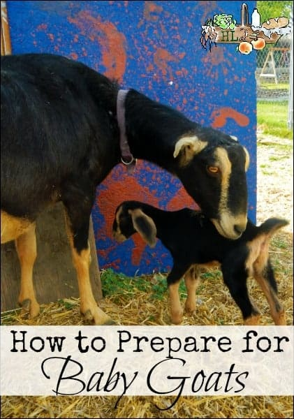 How to Prepare for Baby Goats l Tips and advice to be prepared l Homestead Lady (.com)