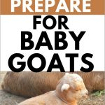 How to Prepare for Baby Goats