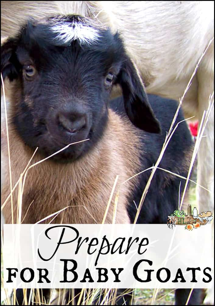 Prepare for Baby Goats l Get ready for kidding season with these tips l Homestead Lady.com