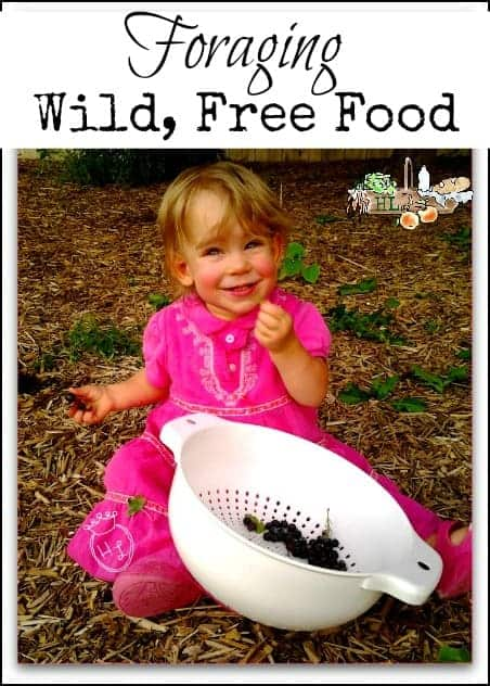 Wild Free Food l Foraging tips l Homestead Lady (.com)