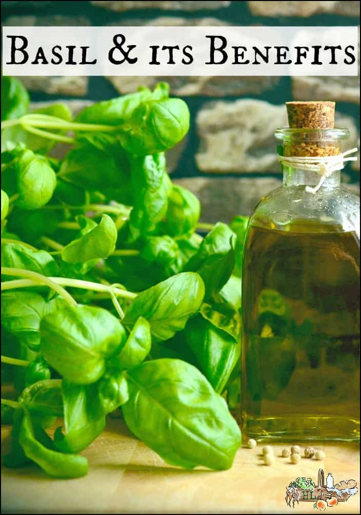 Herb Plants: Basil and Its Benefits