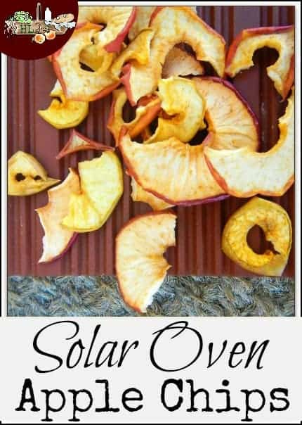 Solar Oven Dehydrated Apple Chips l Preserve food with your solar oven l Homestead Lady (.com)