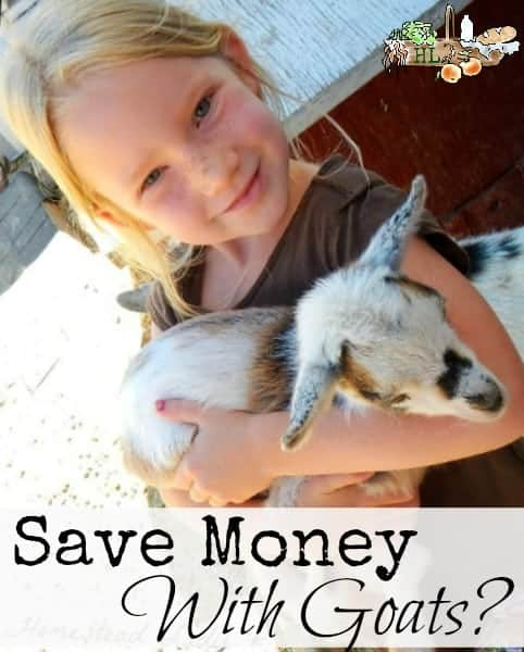 Save Money with Goats l Are dairy goats cost effective l Homestead Lady (.com)