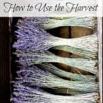The Harvest: Perennial Flowers