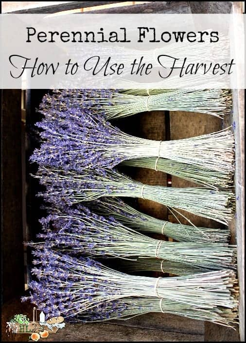 Perennial Flowers and How to Use the Harvest of Color l Flowers, Seeds, Pods and more l Homestead Lady (.com)