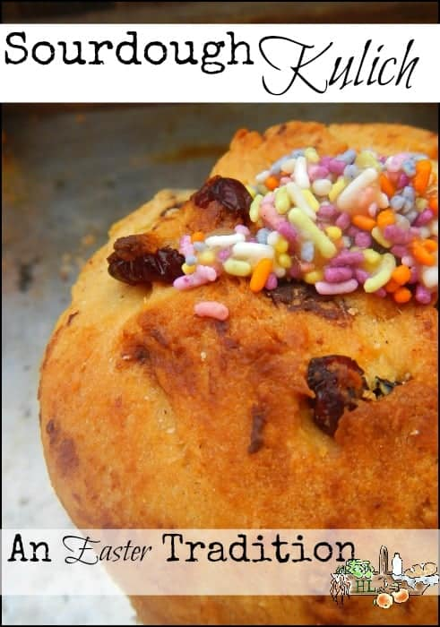 Sourdough Kulich l An Easter Tradition from Russia l Naturally Leavened l Homestead Lady (.com)