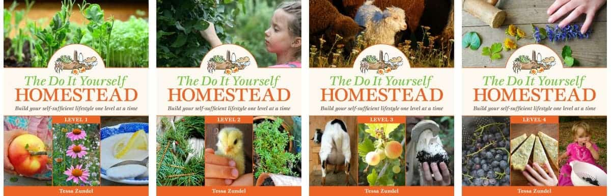 homesteading-levels2