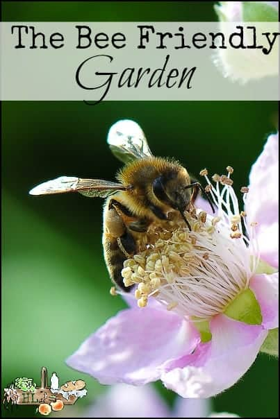 Bee House in the Bee Friendly Garden l Tips on creating a bee friendly garden plus a book review l Homestead Lady (.com)