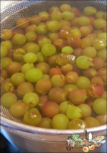 How to make homemade organic raisins l Pop the skins to make the grapes easier to dehydrate l Homestead Lady (.com)