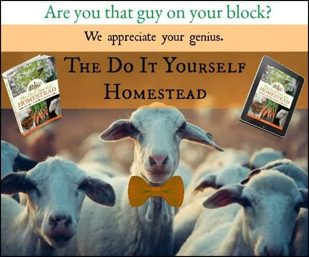 The Do It Yourself Homestead l Homestead Lady