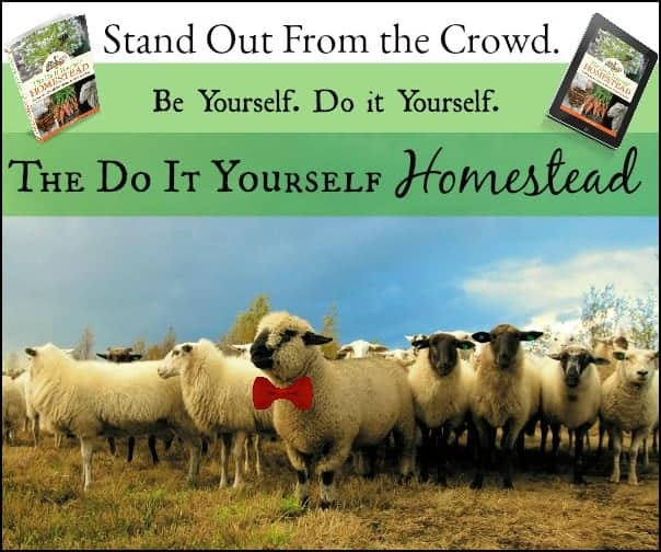 The Do It Yourself Homestead l DIY Self Sufficient Grow Your Own l Homestead Lady