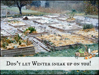 Raised Bed Gardens l Don't let winter sneak up on you l Prepare the garden with these tasks l Homestead Lady.com